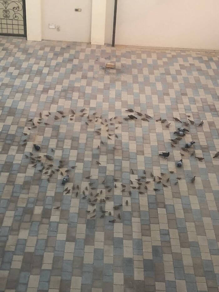 30 Heartwarming Photos That Restored Our Faith In Humanity - Every Morning My Father Places Bird Food In The Yard For My Mother To Wake Up On This View