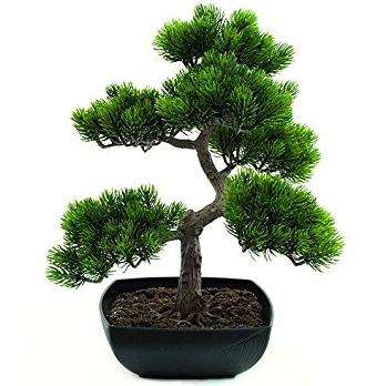 Proses Dan Cara Gampang Menciptakan Pohon Bunga Bonsai