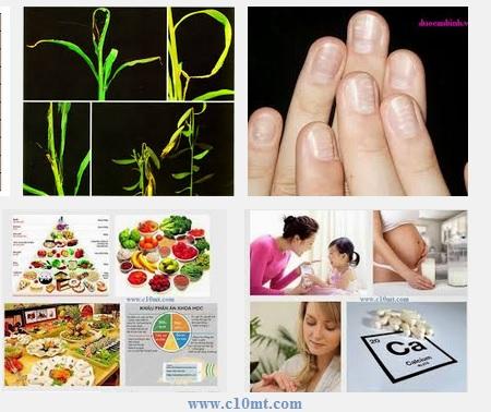 Dấu hiệu để nhận biết cơ thể đang thiếu canxi www.c10mt.com