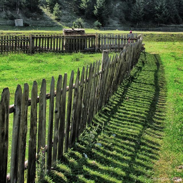 Gardul şi umbra sa - blog FOTO-IDEEA