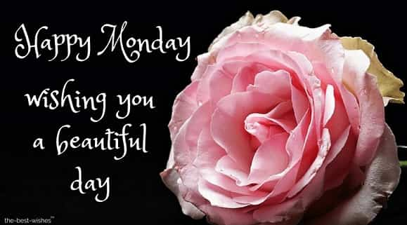 good morning happy monday flowers images