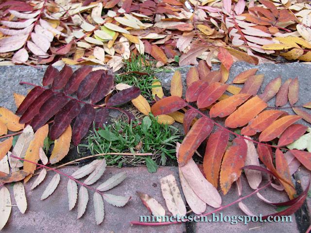 сибирская осень