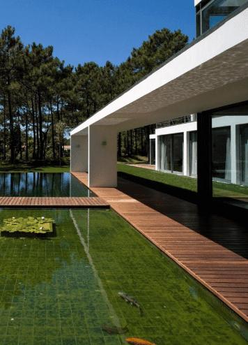 kolam ikan koi terbaik untuk rumahmu   hewan air info