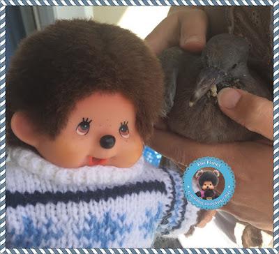 Kiki le Vrai et Colombine le bébé pigeon - oisillon - pigeonneau