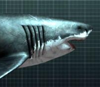 Megalodon: The Monster Shark | Vu Phoenix