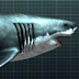 Megalodon: The Monster Shark