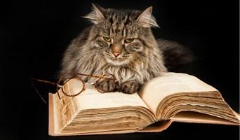 Kucing Buku