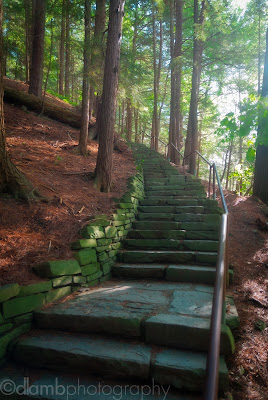 http://www.redbubble.com/people/dlamb/works/15454381-forest-stairway-at-toughannock-falls