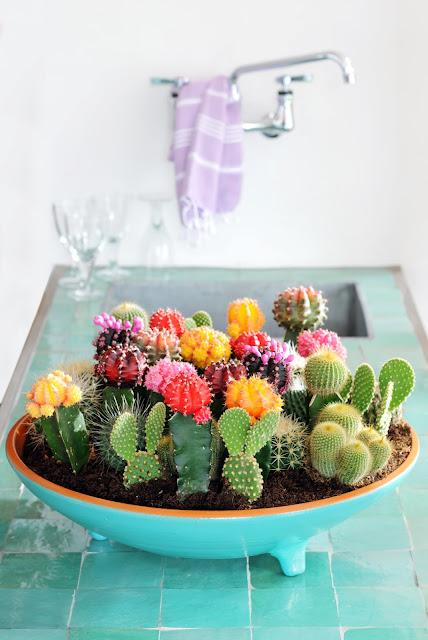 succulent garden ideas for the bathroom