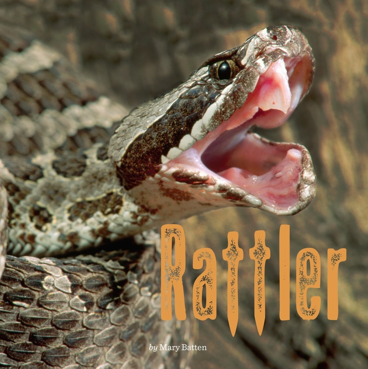 the rattler by mary young Moeller to join volleyball team at st mary's from staff reports as she will suit up with the rattler volleyball team misd softball coach young resigns.