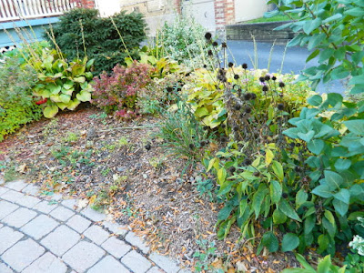Paul Jung Gardening Services Toronto Fall Cleanup Front Yard in Lawrence and Yonge Before