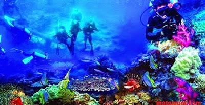 keindahan Bawah laut wisata bunaken