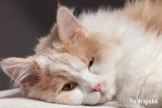 Koty specjalnej troski – kochajmy je!
