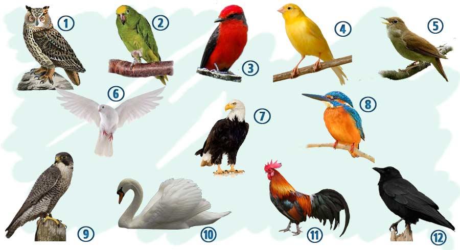Lo que el ave de tu mes de nacimiento revela sobre tu personalidad