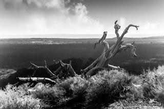 Cramer Imaging's professional quality landscape photograph of a dead tree in weeds on a lava plain at Craters of the Moon National Monument