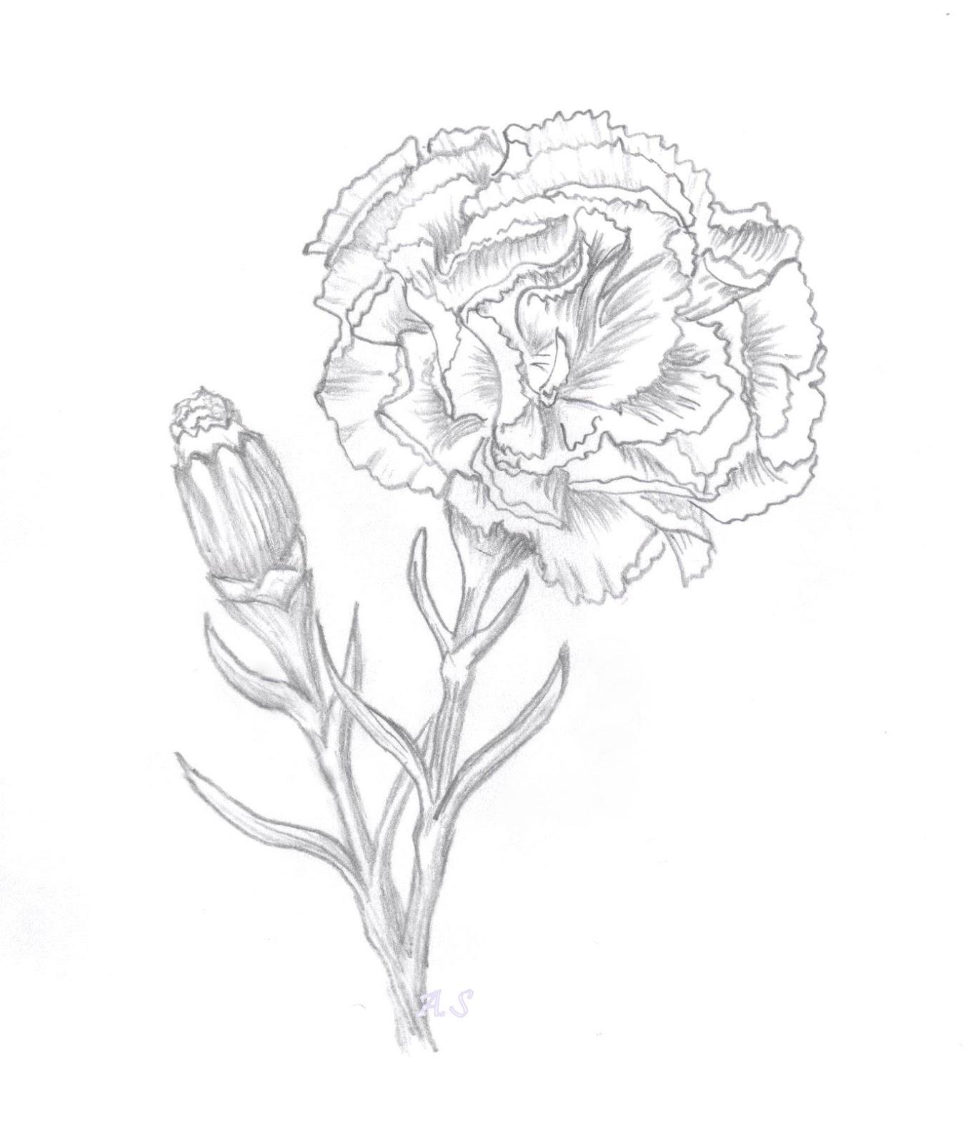Alexandra S Art Amp Papercraft Carnation Digi Sketch