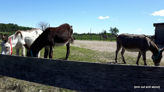 {Erin Out and About}  Donkey Sanctuary of Canada