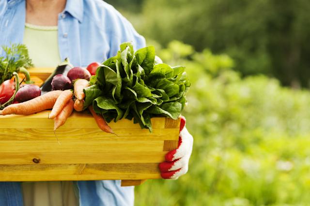 dietas solo de productos organicos