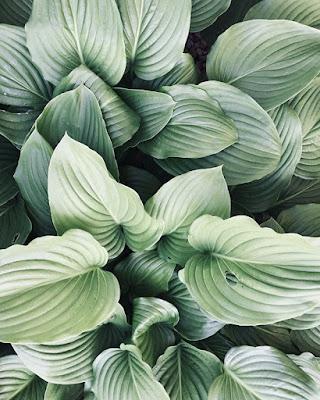 Zobacz czego dowiesz się z wyglądu liści Twojej rośliny!