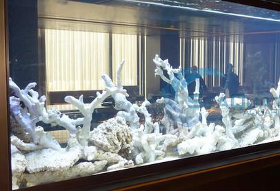 Aquarium Akrilik dan Kaca