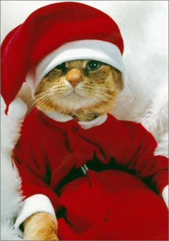 Free Desktop Background Wallpapers: Funny Christmas Cats Wallpapers