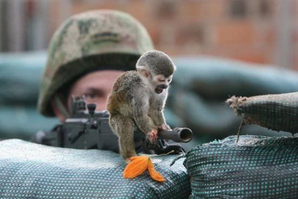 It 39 s hd animals funny wallpapers funny animals with guns - Pictures of funny animals with guns ...