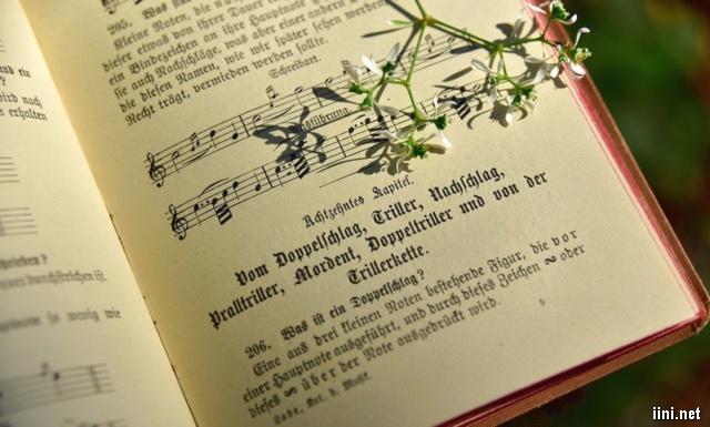 những cánh hoa trắng li ti bên sách