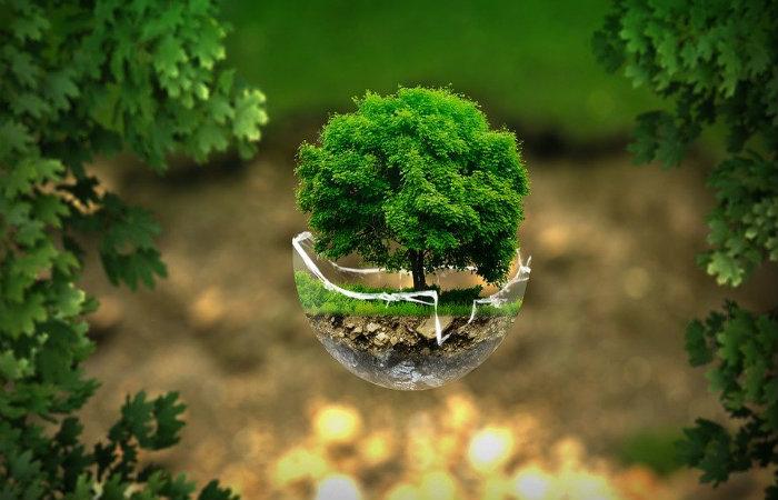 Árbol-de-la-Vida