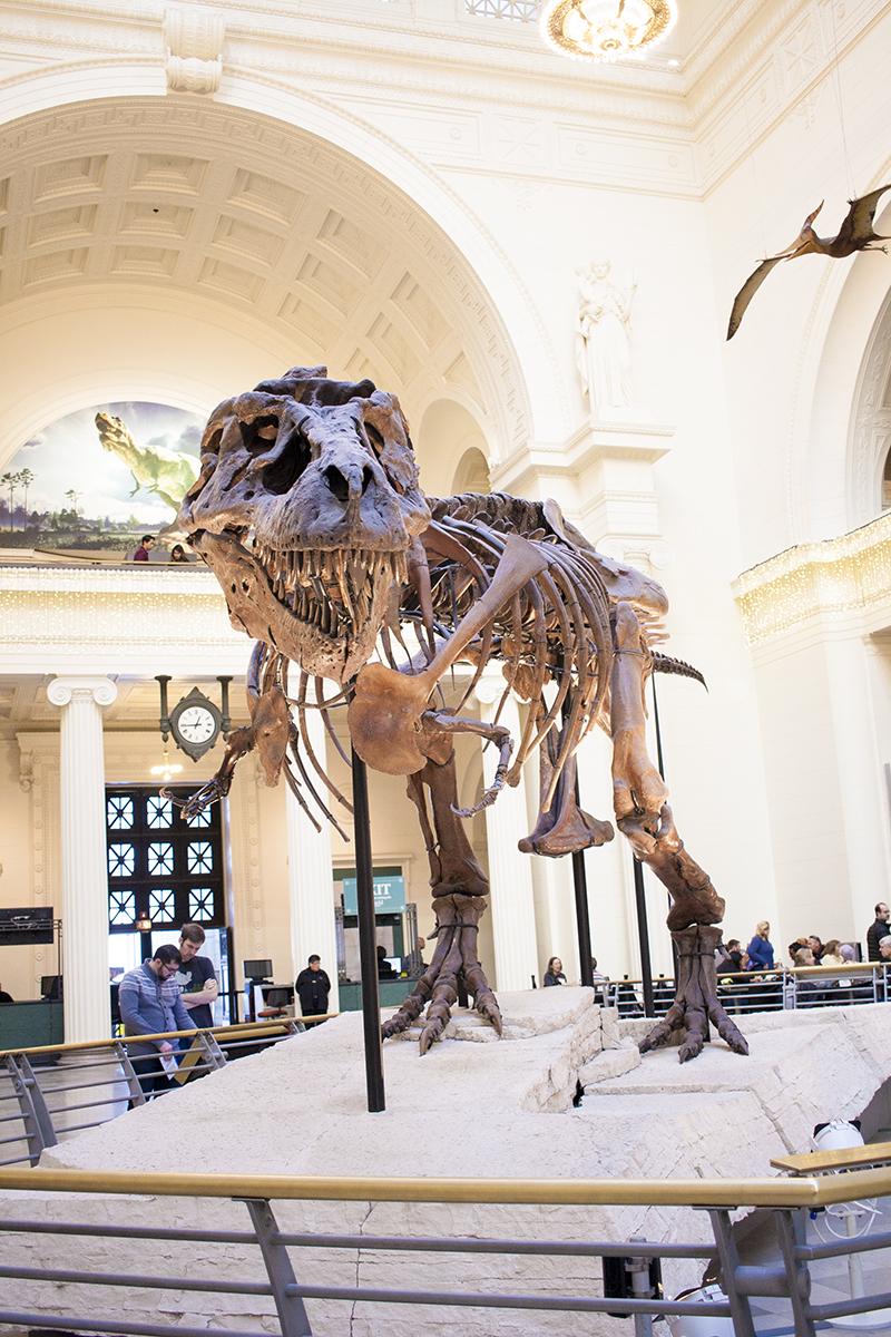 Sue, Trex, Tyrannosaurus rex, Field Museum