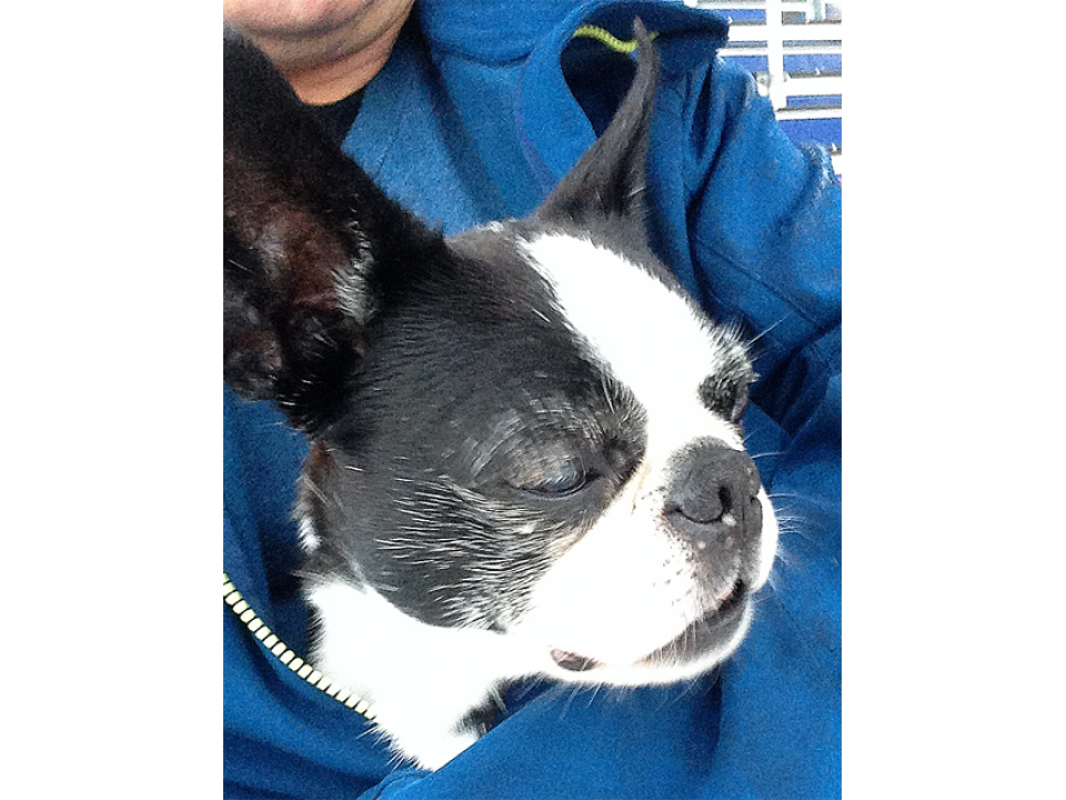 Northeast Pa Dog Rescue