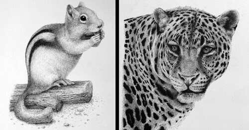 00-Rens-Ink-Animal-Wildlife-Pen-and-Ink-Stippling-Drawings