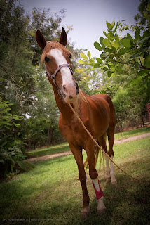 Horse, Abuja