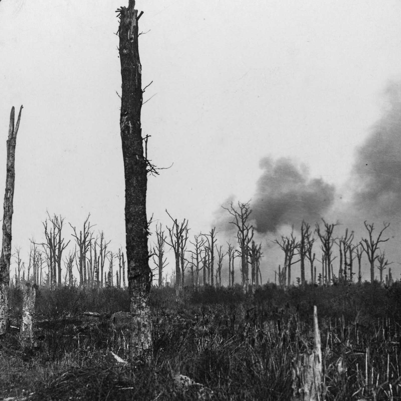 Mametz Wood was the objective of the 38th (Welsh) Division at the Battle of the Somme. The division took 4,000 casualties capturing the wood.