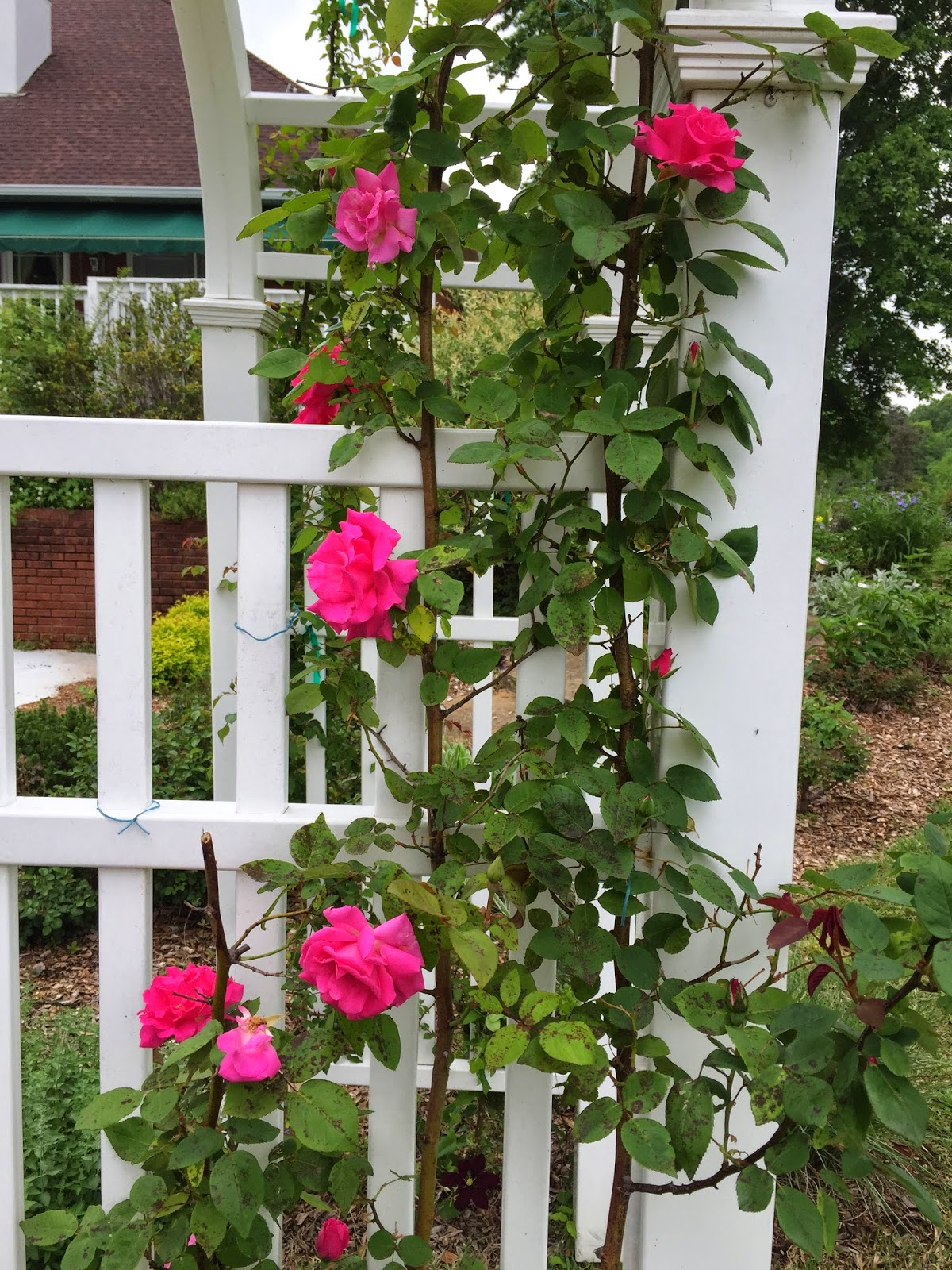 Love Garden Roses: In Search Of My Mother's Garden
