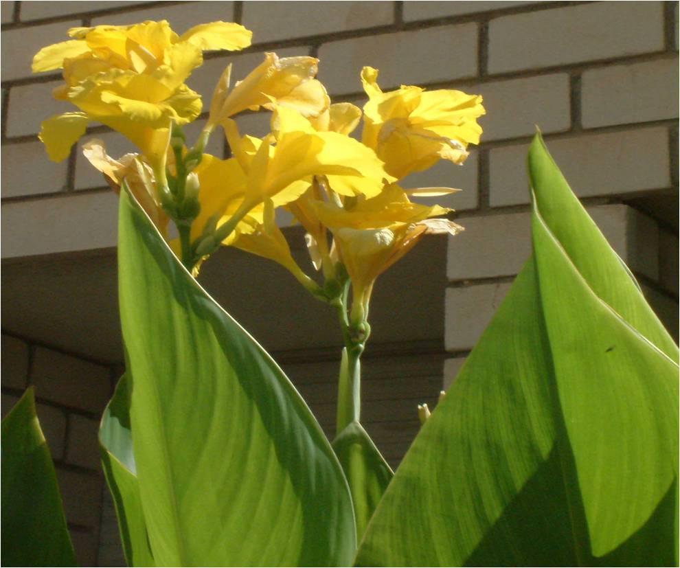El huerto de ram n flores de plantas ornamentales iii for Plantas decorativas con sus nombres