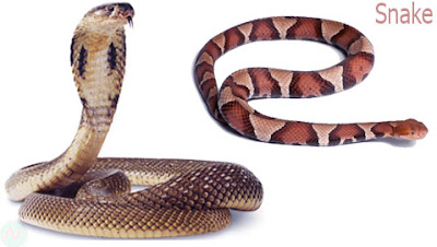 snake animal, sanke reptile