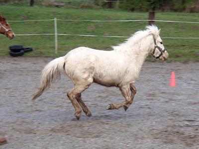 konie, kucyki, paszport dla konia