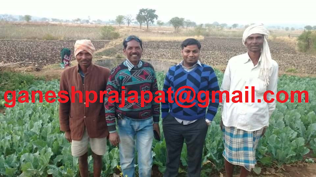 Indian agriculture, Indian agriculture problem, Indian agriculture policy, Minimum Support Price, Agriculture, Doubling farmer income,  Agrotech agriculture consultancy, agriculture consultancy, agriculture consultancy Jaipur, agriculture consultancy Rajasthan,