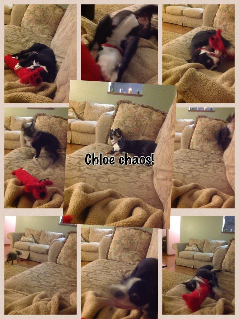 Cloe chaos