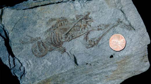 Fósiles de diminutos humanoides de 600 millones de años descubiertos en la Antártida