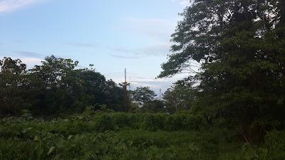 Hijau ciri khas Kalimantan yang kaya akan hutan