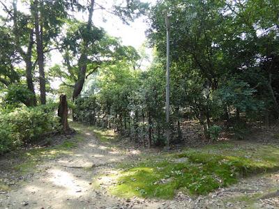 佐太天神宮の森