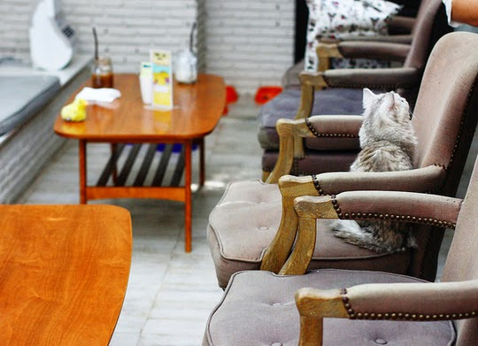 Bangkok Purr Cat Café