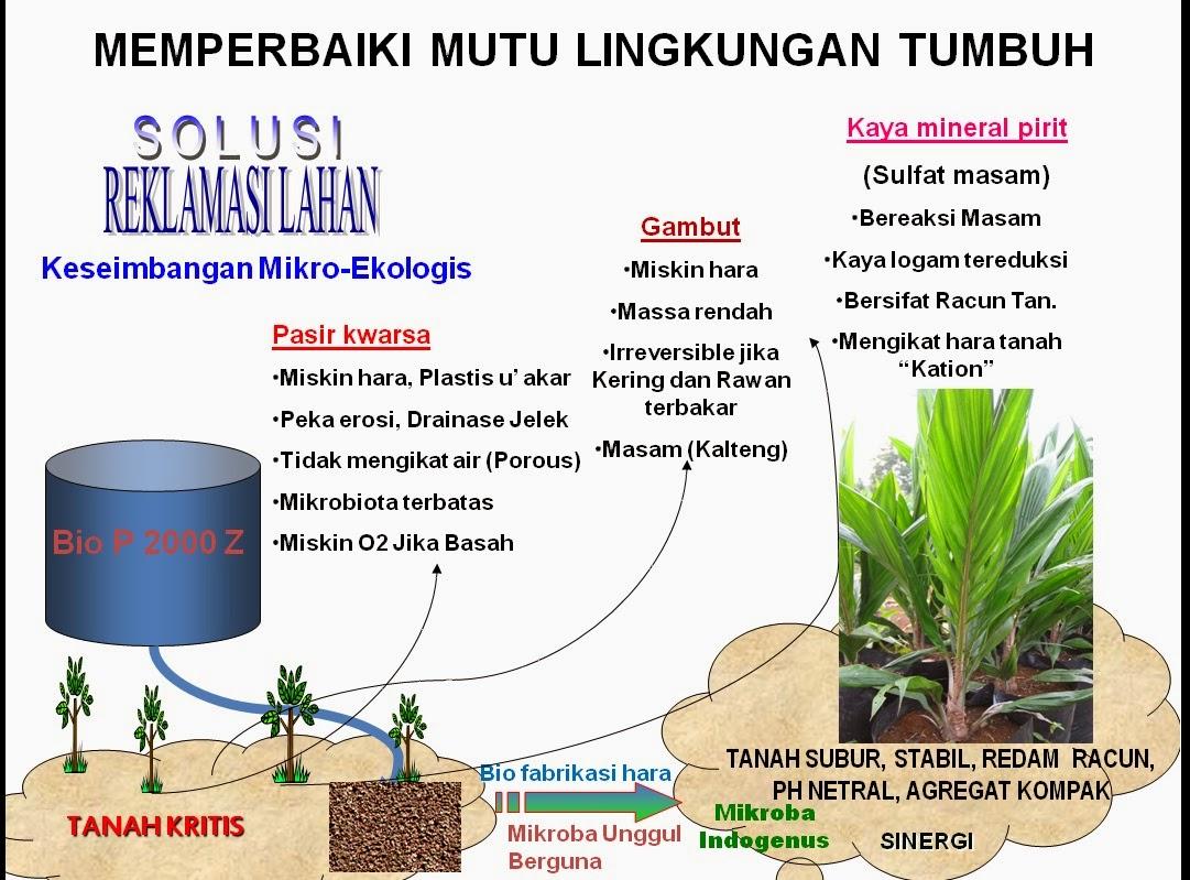 Bio PZ Bagi Kelapa Sawit Di Lahan Gambut Konsultan Kebun Sawit