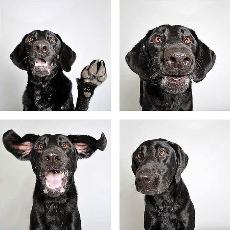 Proyecto fotográfico ayuda a los perros de refugio a encontrar un nuevo hogar