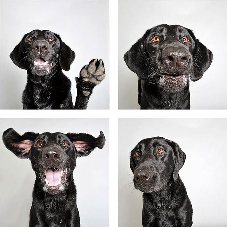 Proyecto fotográfico ayuda a los perros de escondite a hallar un nuevo hogar