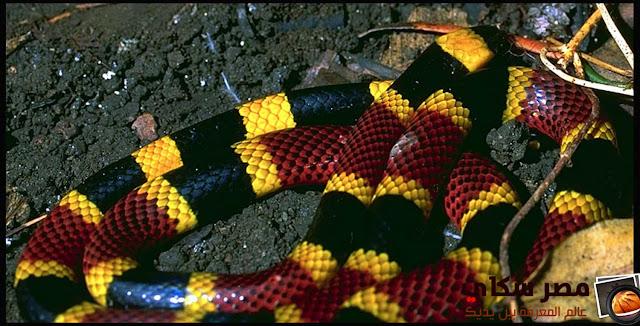 كيف تميز بين الثعابين السامة والغير سامة Venomous snakes