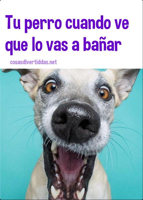 la cara de tu perro cuando sabe que lo vas a bañar