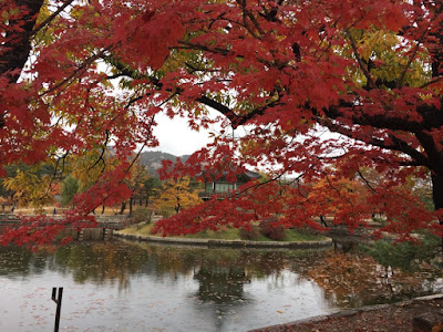 Top 10 địa điểm đẹp nhất mùa thu hàn quốc