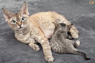 Kucing dan Kitten